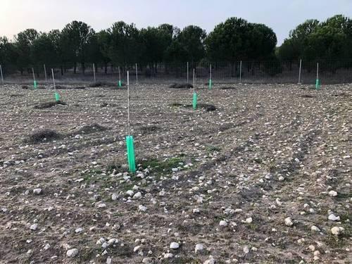 imagen 3 de Venta de finca con plantación pistachos en Cogeces de Iscar