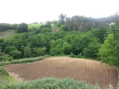 imagen 2 de Venta de terreno rústico con invernadero en Erandio (Vizcaya)