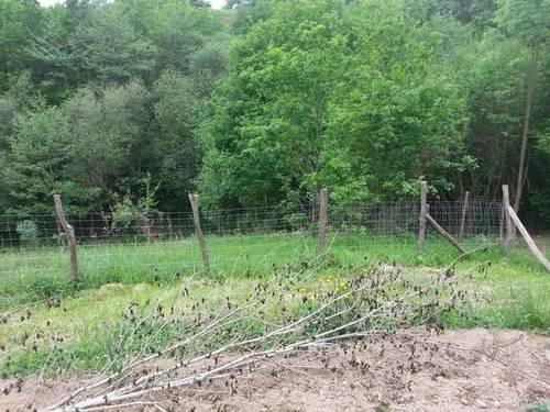 imagen 3 de Venta de terreno rústico con invernadero en Erandio (Vizcaya)