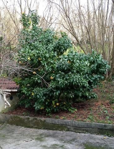 imagen 4 de Venta de finca con invernadero en Erandio