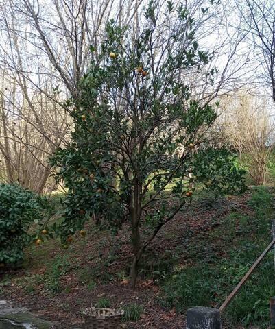 imagen 5 de Venta de finca con invernadero en Erandio