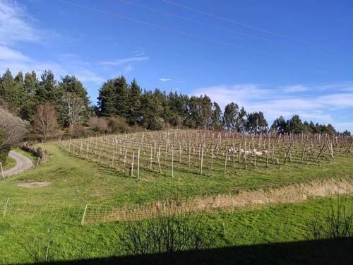 imagen 2 de Venta de terreno con viñedo en Ibarrangelu (Vizcaya)