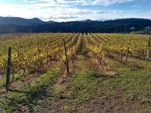 imagen 3 de Venta de terreno con viñedo en Ibarrangelu (Vizcaya)