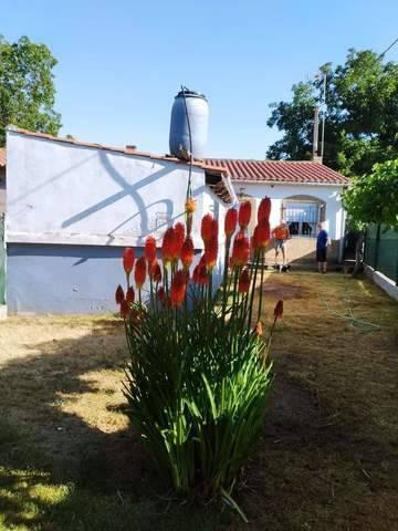 imagen 4 de Venta de finca de nogales con vivienda en Benavente
