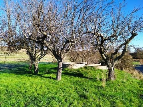 imagen 5 de Venta de terreno en Roales (Zamora)