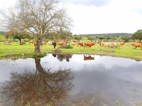 imagen 4 de Venta de dehesa en Zamora