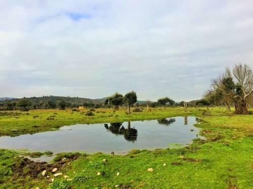 imagen 1 de Venta de dehesa en Zamora