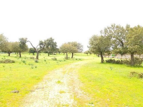 imagen 5 de Venta de dehesa en Zamora