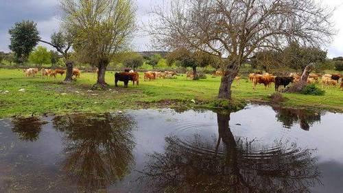 imagen 3 de Venta de dehesa en Zamora
