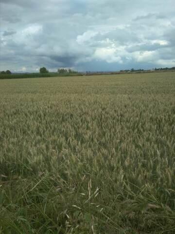 imagen 2 de Venta de terreno rústico en Movera (zaragoza)