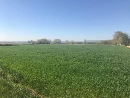 imagen 4 de Venta de terreno rústico en Movera (zaragoza)