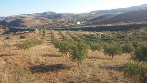 imagen 1 de Venta de olivar en Morata de Jalón (Zaragoza)