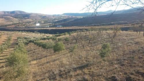 imagen 4 de Venta de olivar en Morata de Jalón (Zaragoza)