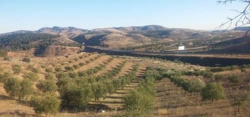 imagen 3 de Venta de olivar en Morata de Jalón (Zaragoza)