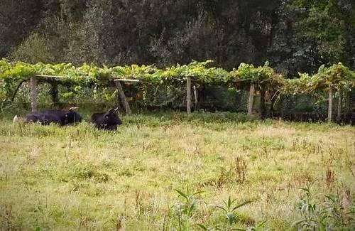 imagen 6 de Venta de casa rural en Valga