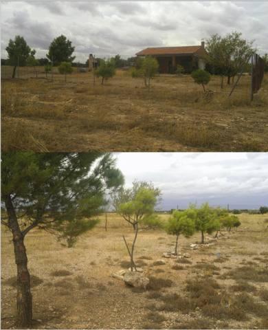 imagen 2 de Venta de terreno con casa de campo en Campo de Criptana