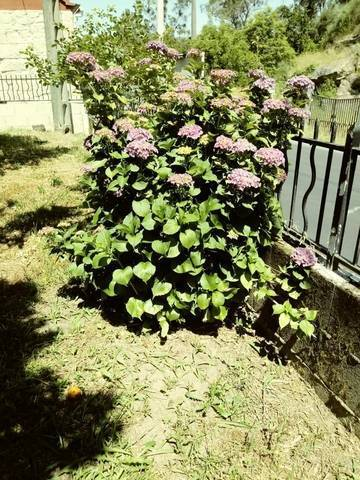 imagen 2 de Venta de casa rural en Arbo (Pontevedra)