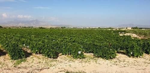 imagen 3 de Venta de casa con bodega en Novelda (Alicante)