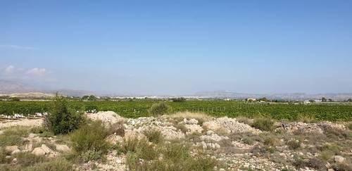 imagen 6 de Venta de casa con bodega en Novelda (Alicante)