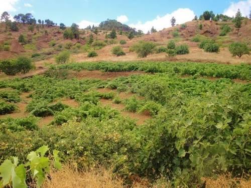 imagen 3 de Venta de bodega en El Pinar (El Hierro)