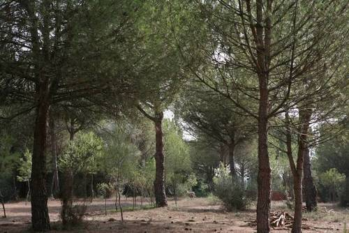 imagen 2 de Venta de finca de recreo en Lepe (Huelva)