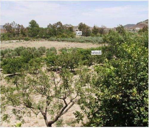 imagen 6 de Venta de cortijo con bodega en Purchena (Almería)