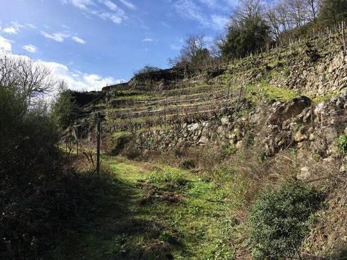 imagen 1 de Venta de viña con bodega en Escarión (Lugo)