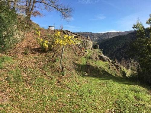 imagen 2 de Venta de viña con bodega en Escarión (Lugo)