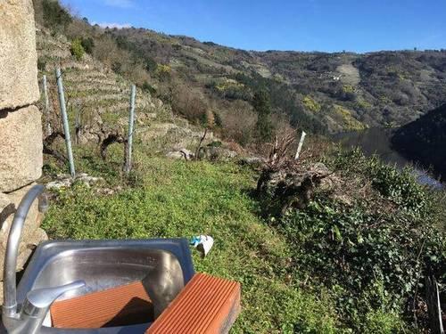 imagen 5 de Venta de viña con bodega en Escarión (Lugo)