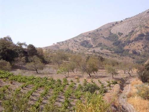 imagen 3 de Venta de cortijo con bodega en Castaras (Granada)