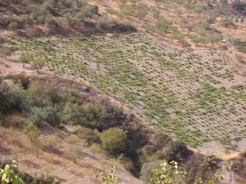 imagen 2 de Venta de cortijo con bodega en Castaras (Granada)