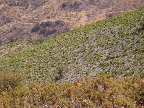 imagen 5 de Venta de cortijo con bodega en Castaras (Granada)