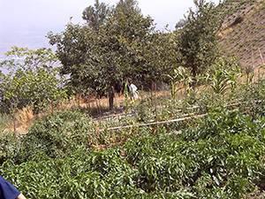 imagen 7 de Venta de cortijo con bodega en Castaras (Granada)