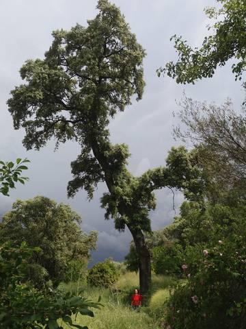 imagen 5 de Venta de espectacular finca con casa rural en Madroñera (Cáceres)