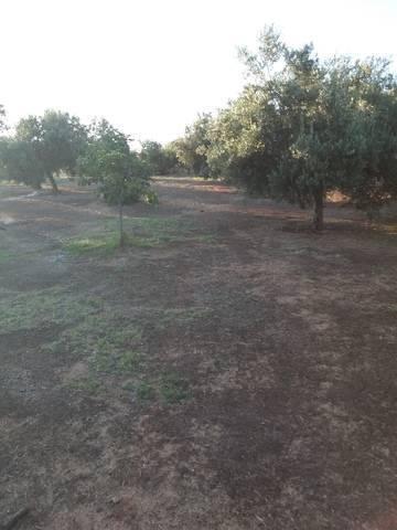 imagen 1 de Venta de casa de campo con olivos en Bailén