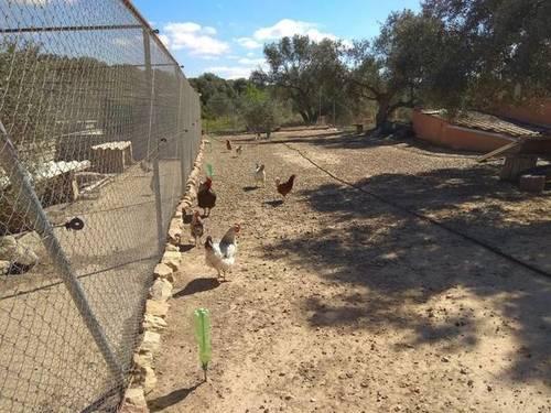 imagen 4 de Venta de casa rural con terreno en Flix