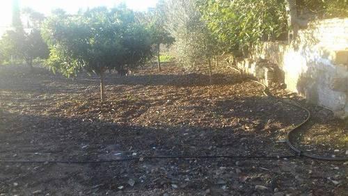 imagen 2 de Venta de casa rural en Jerez de la Frontera (Cádiz)