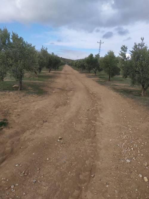 imagen 1 de Venta e finca olivar y calma riego en Dehesas de Guadix