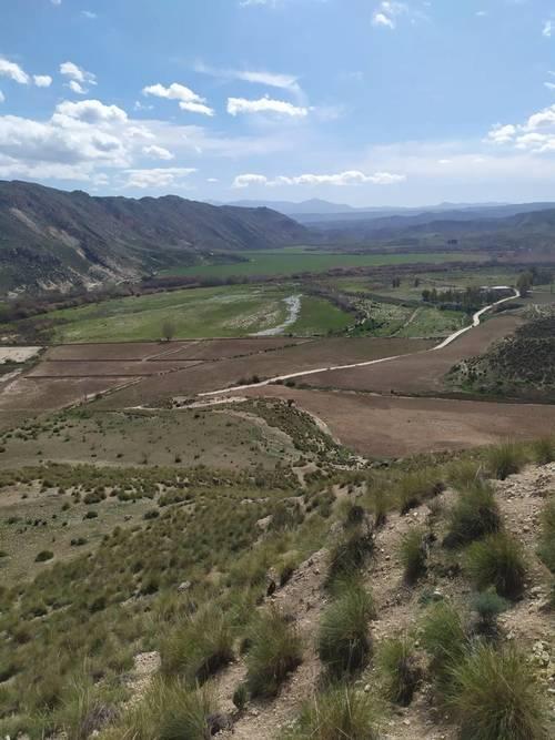 imagen 3 de Venta e finca olivar y calma riego en Dehesas de Guadix