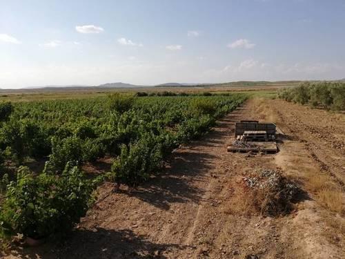 imagen 2 de Venta de terreno con casa en Albatana
