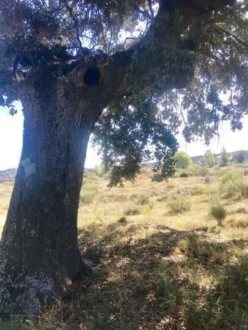 imagen 4 de Venta de finca en Aldea del Fresno (Madrid)
