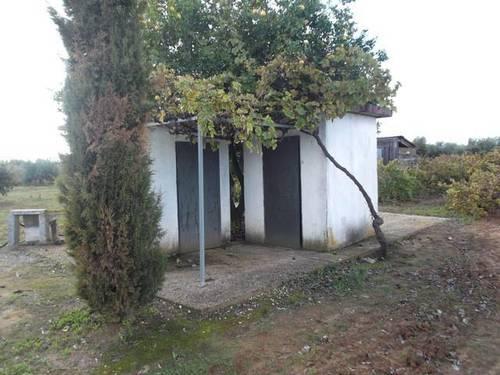 imagen 1 de Venta de finca de olivos en Rociana del Condado (Huelva)