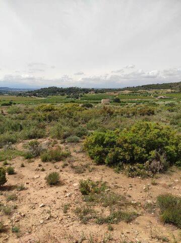 imagen 3 de Venta de finca rústica en Cheste (Valencia)