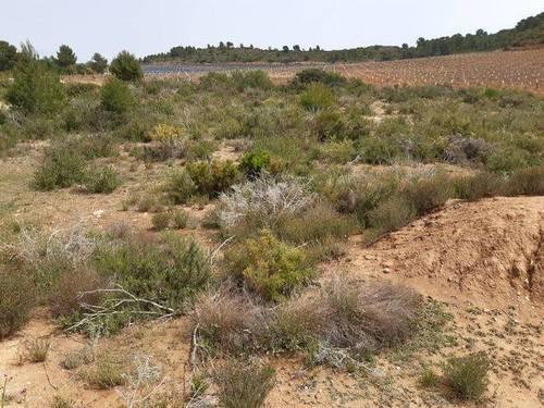 imagen 2 de Venta de finca rústica en Cheste (Valencia)