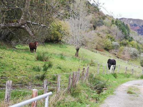 imagen 2 de Venta de finca rústica, pastizal en Cuerrias de Maza (Asturias)