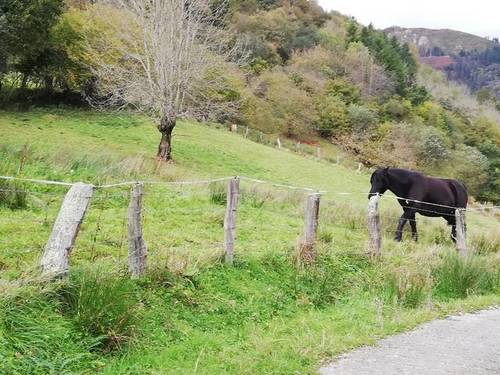 imagen 3 de Venta de finca rústica, pastizal en Cuerrias de Maza (Asturias)