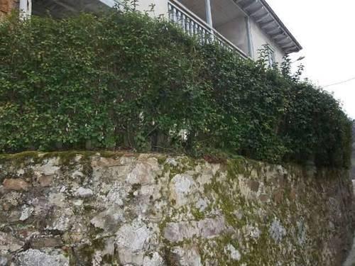 imagen 2 de Venta de  casa rural con cuadra en Melendreros