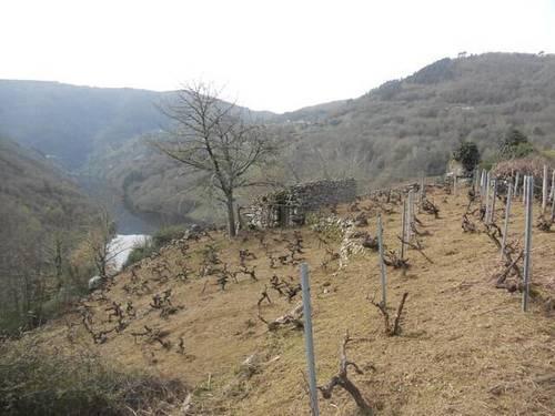 imagen 2 de Venta de viñedo en Ribeira Sacra