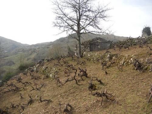 imagen 1 de Venta de viñedo en Ribeira Sacra