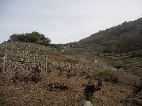 imagen 3 de Venta de viñedo en Ribeira Sacra
